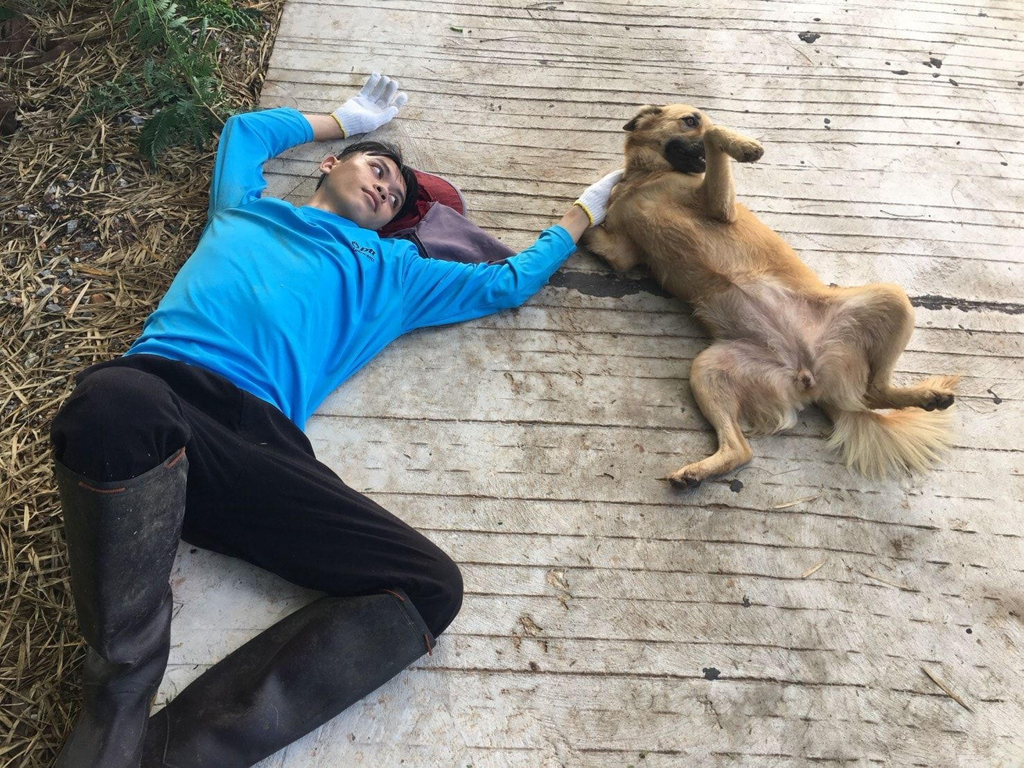 Dogilike.com :: โหดเกินคน ... ชายฟันหมาจมูกเกือบขาด เหตุแค่เพราะโดนหมาเห่าใส่