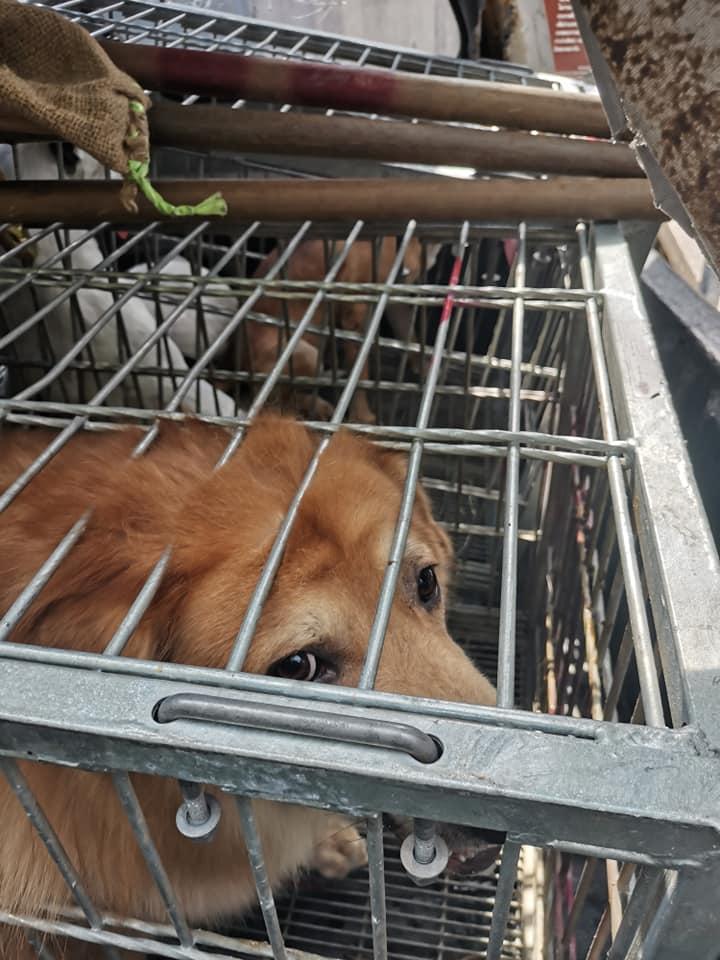 Dogilike.com :: ไม่รักกันแล้วเหรอ ... เจ้าของเรียกเขตมาจับตัวหมาไปทั้งที่ยังสวมปลอกคอ