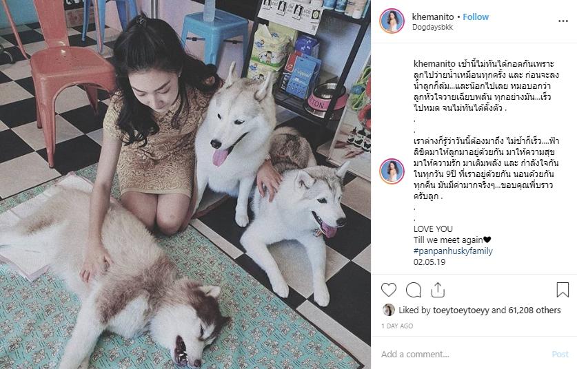Dogilike.com :: แพนเค้ก เขมนิจ สุดเศร้า น้องหมาตัวโปรดเสียชีวิตกระทันหัน