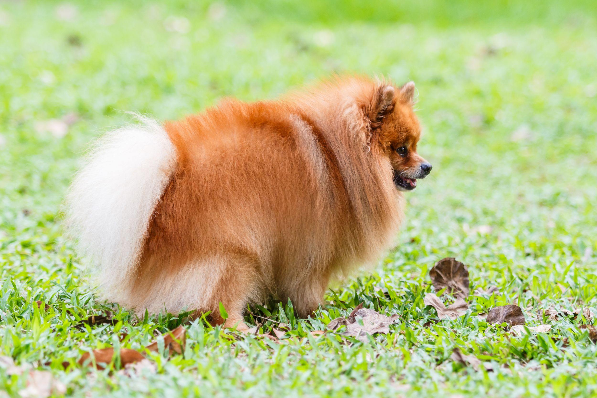 Dogilike.com :: กองปราบเตือน ปล่อยน้องหมาอึกลางถนนแล้วไม่เก็บ แจ้งจับได้!!