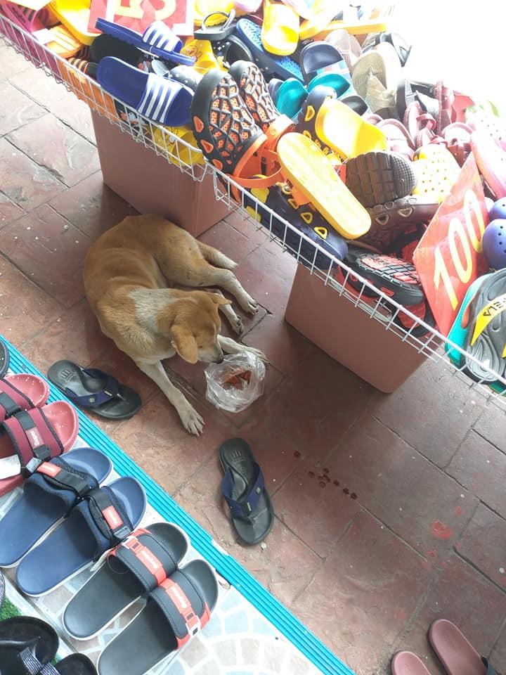 Dogilike.com :: น้องหมาจรบาดเจ็บตอบแทนหญิงใจดีที่ดูแลจนหาย ด้วยการเป็นยามเฝ้าร้านให้