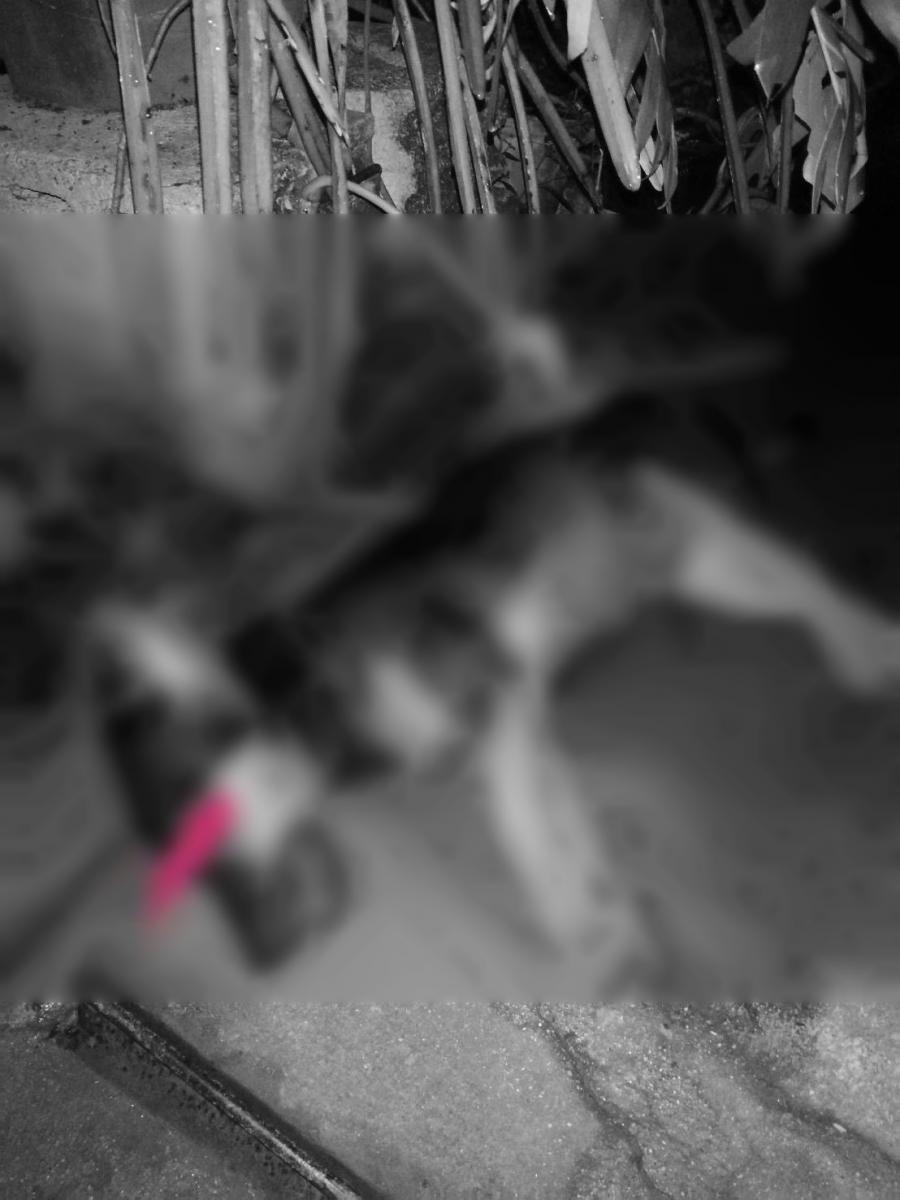Dogilike.com :: สาวหวั่นอันตรายใกล้ตัว ร้องสื่อสุนัขถูกวางยา พบบ้านใกล้เคียงโดนแบบเดี่ยวกัน