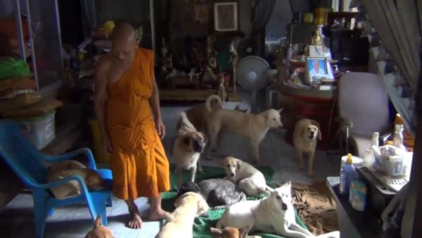 Dogilike.com :: พระสุดทน คนเลี้ยงหมาไม่รับผิดชอบถึงขั้นจับใส่กรงส่งเคอรี่มาที่วัด!!