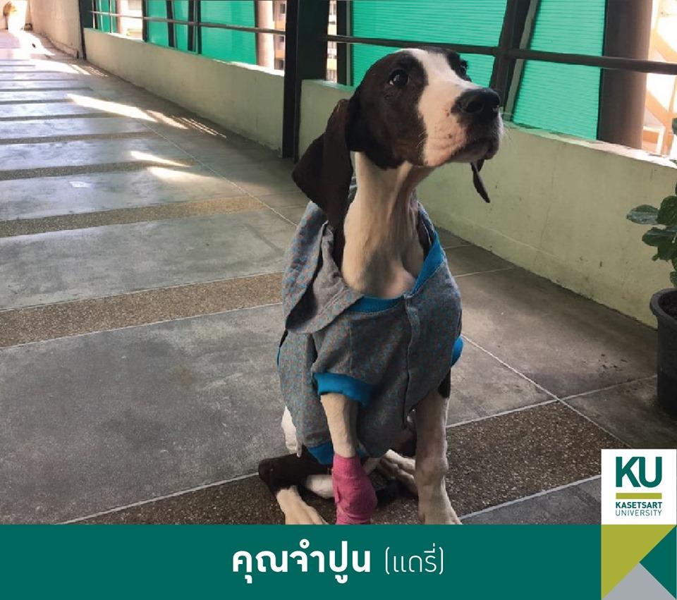 Dogilike.com :: ในหลวง พระราชทานชื่อ 13 เกรทเดน เป็นกลุ่มดอกไม้ในประเทศไทย