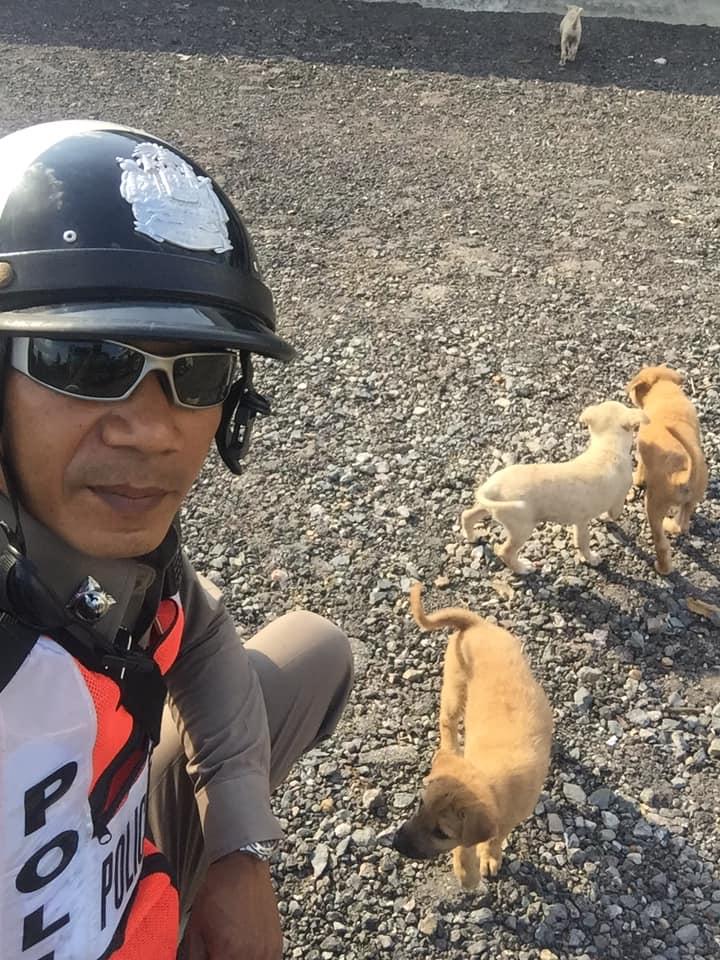 Dogilike.com :: ประทับใจ ... พี่ตำรวจใจดีเจียดเงินซื้อข้าวเลี้ยงน้องหมาแม่ลูกอ่อน
