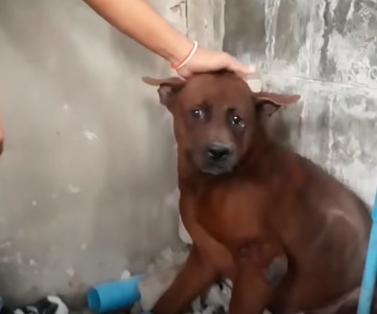 Dogilike.com :: เอ็นดู! ... น้องหมาติดซอกบ้าน เจ้าหน้าที่ช่วยมาได้กลับทำหน้าอายใส่