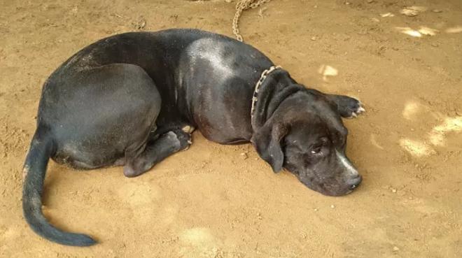 Dogilike.com :: เจ้าของพิตบูลกัดแขนกะเหรี่ยงขอความเป็นธรรม ยันหมาไม่ดุ กัดเพราะเข้าพื้นที่ยามวิกาล