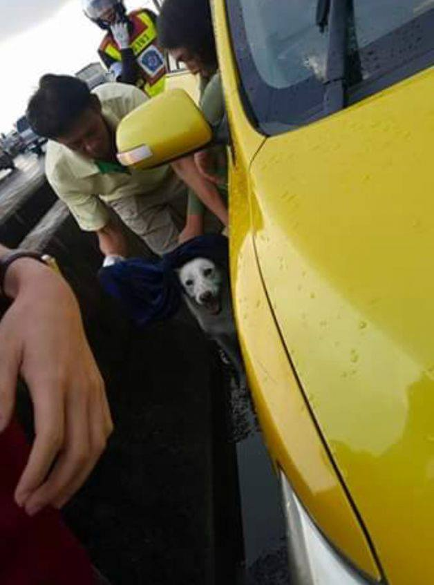 Dogilike.com :: เอาใจไปเลย! ผู้ใช้ทางพร้อมใจช่วยน้องหมาวิ่งบนทางด่วนบางพลี-สุขสวัสดิ์