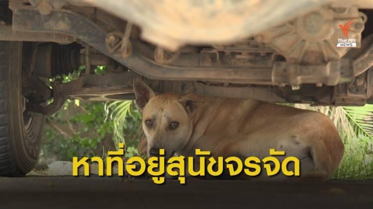 Dogilike.com :: นนทบุรี เตรียมตั้งศูนย์พักพิงสุนัขจรจัด มั่นใจช่วยลดปัญหาโรคพิษสุนัขบ้าได้