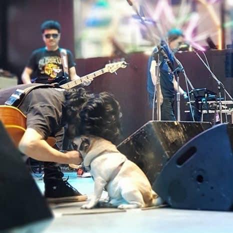 Dogilike.com :: มีความอ่อนโยน ... เผยภาพน่ารัก พี่เสก โลโซ พาน้องหมาปั๊กสุดเลิฟเฝ้าหน้าเวที