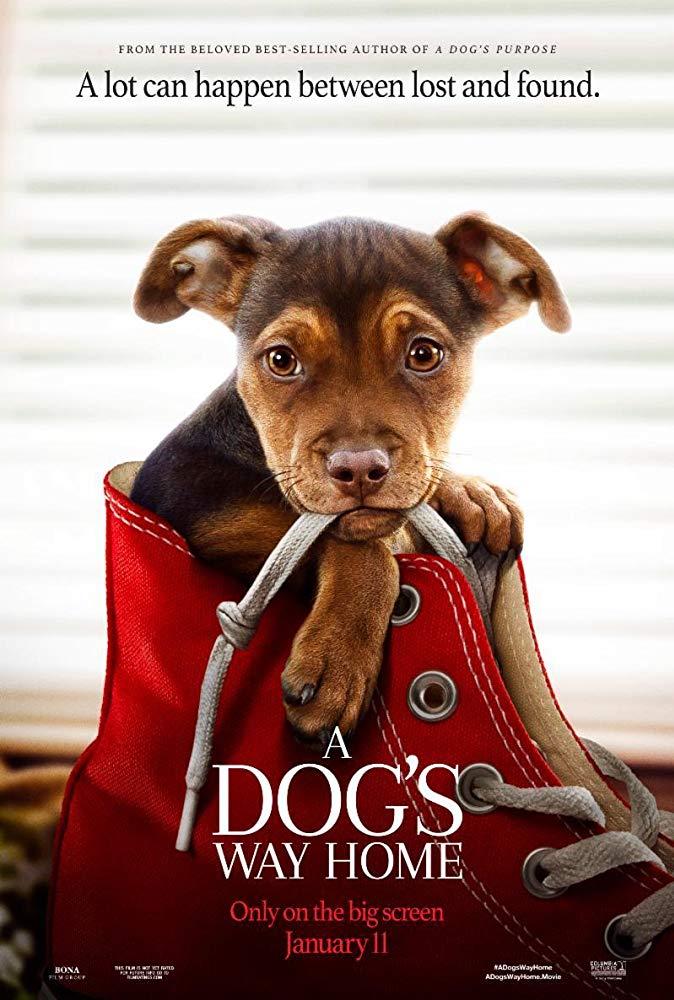 Dogilike.com :: หนังดีต้องดู! A Dogs Way Home ไกลแค่ไหนก็จะตามหาเจ้านายให้เจอ