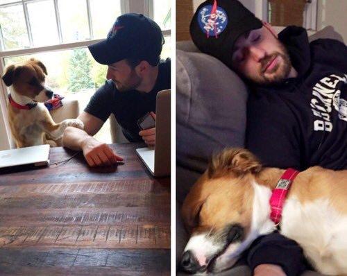 Dogilike.com :: อย่างคิ้วท์! แอบส่องความน่ารัก คริส อีแวนส์ กัปตันอเมริกาสุดหล่อกับน้องหมาสุดเลิฟ
