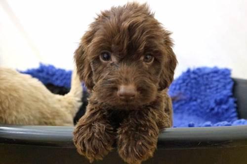 Dogilike.com :: รู้ก่อนดีกว่า! เลือกรับเลี้ยงลูกหมายังไงไม่ให้ได้หมาป่วยมาแทน