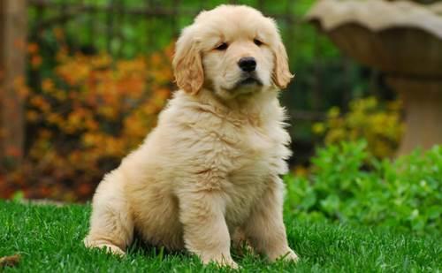 Dogilike.com :: 4 Tips โกงอายุน้องหมาให้ดูเด็กตลอดเวลา