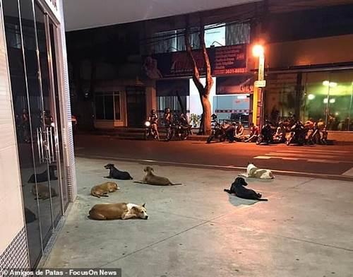Dogilike.com :: 6 ตูบซื่อสัตย์วิ่งตามรถพยาบาล นอนเฝ้าชายไร้บ้านเข้ารักษาตัว !