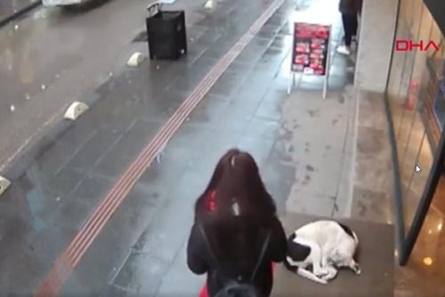 Dogilike.com :: สาวตุรกีเจอสุนัขจรฯ นอนตัวสั่นในวันฝนตก เธอเลยตัดสินใจทำสิ่งนี้ !