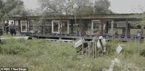 Dogilike.com :: สหรัฐฯ ออกกฎหมายห้ามร้านสัตว์เลี้ยงขายสัตว์ที่ไม่ได้มาจากศูนย์พักพิงฯ !