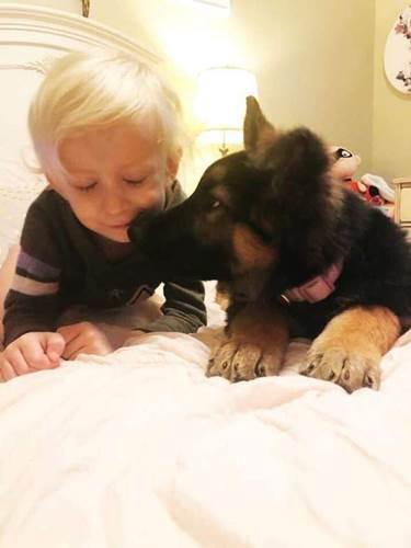 Dogilike.com :: คุณแม่ขอแชร์! คลิปหนูน้อยคอยดูแลพี่หมา ห่มผ้าให้หลับฝันดี