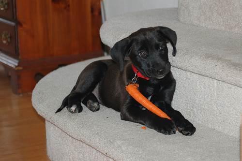 Dogilike.com :: 6 ซุปเปอร์ฟู้ดมากคุณค่า ช่วยน้องหมาสุขภาพดี !