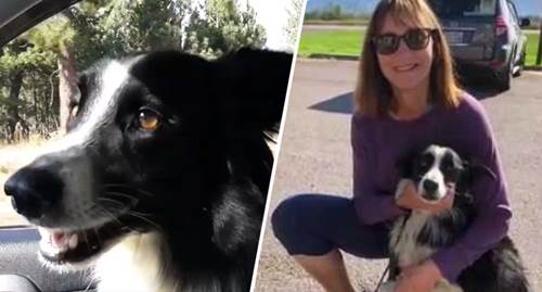 Dogilike.com :: สาวลาออกจากงาน ตามหาสุนัขหาย 57 วัน จนสุดท้ายเป็นแบบนี้!