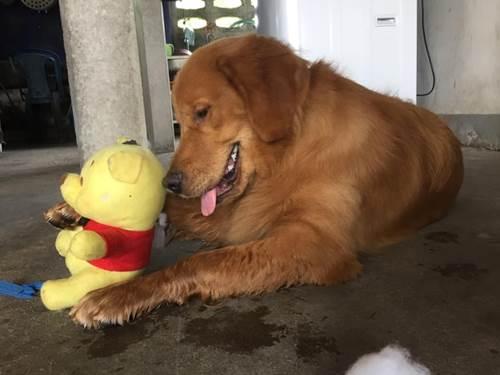 Dogilike.com :: เจ้าของโพสต์เศร้า พาตูบทำหมันผ่านไป 3 วัน นอนสิ้นใจ !