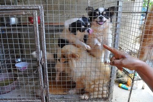 Dogilike.com :: คุณป้าดูแลหมาแมว 300 ตัว วอนคนใจดีช่วยเหลือหลังราคายางตก !