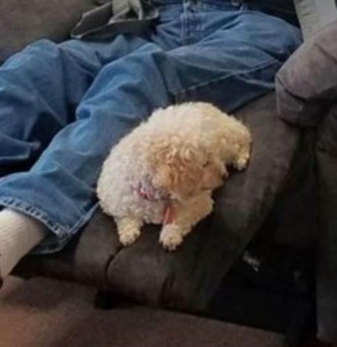 Dogilike.com :: น่ารัก! คุณตาจะซื้อเก้าอี้ตัวใหม่ พกเจ้าตูบมาช่วยเช็กความนุ่มแบบนี้!