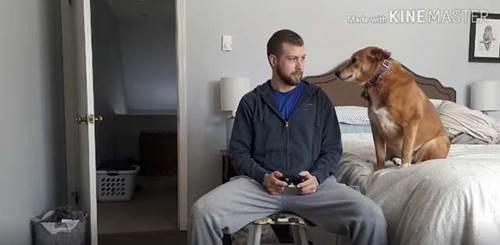 Dogilike.com :: หนุ่มเล่นเกมไม่สนใจหมา ตูบเลยงัดไม้เด็ดจนชาวเน็ตอมยิ้มเป็นแถว! (คลิป)