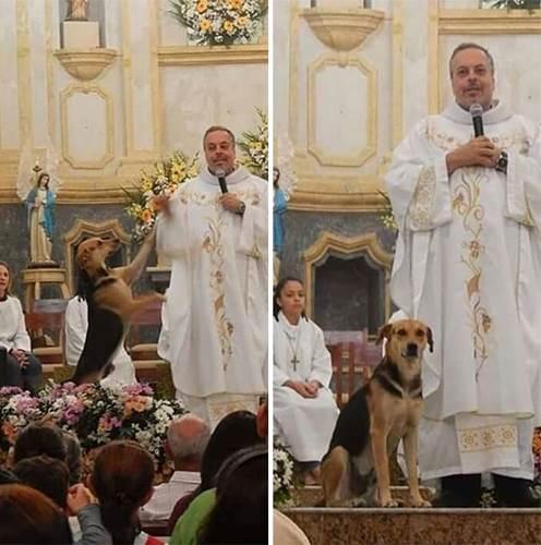 Dogilike.com :: น่ารัก! บาทหลวงใจดีให้สุนัขจรจัดเข้าโบสถ์ หวังให้ผู้คนรับเลี้ยง
