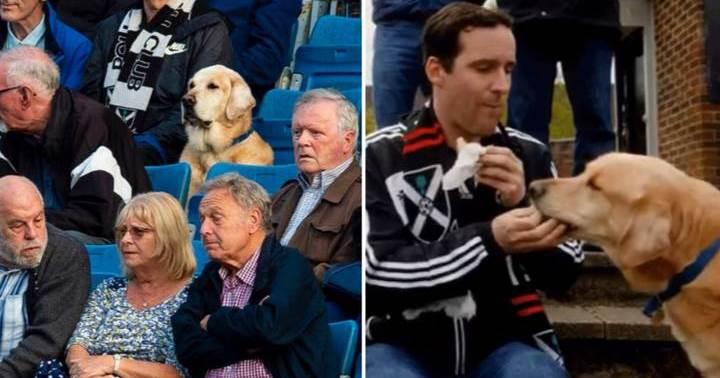 Dogilike.com :: โกลเด้นฯนั่งเชียร์ฟุตบอลทีมโปรด น่ารักเรียบร้อยจนชาวเน็ตตกหลุมรัก!
