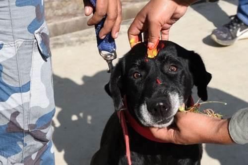 Dogilike.com :: เนปาลจัดเทศกาล บูชาสุนัข ตามปฏิทินฮินดู น่ารักประทับใจทั่วโลก!