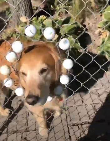 Dogilike.com :: สาวไปตีกอล์ฟเจอรั้วหน้าตาประหลาด พอเข้าไปใกล้ๆ ถึงรู้ว่าเป็นแบบนี้!