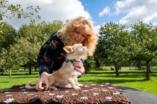 Dogilike.com :: สวยที่ใจ! หญิงสาวคนนี้ดูแลสุนัขแก่และพิการ 27 ตัวที่ไม่มีใครต้องการ