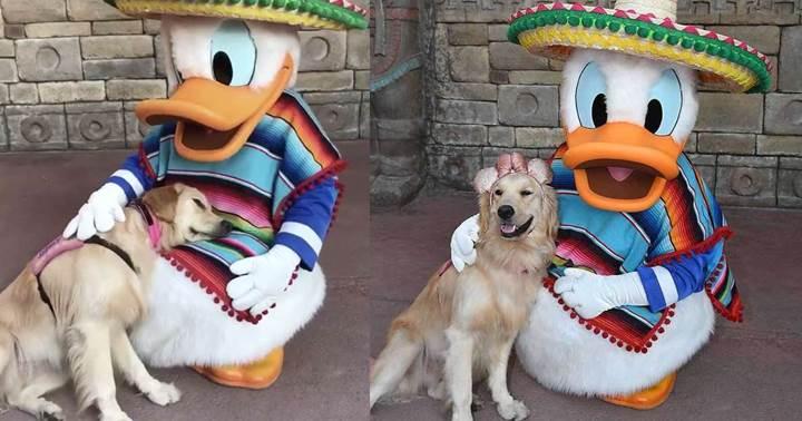 Dogilike.com :: ฟินสุดๆ! ตูบเจอการ์ตูนโปรด โดนัลด์ ดั๊ก นั่งอ้อนไม่ยอมลุกไปไหน(คลิป)