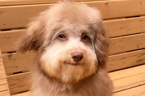 Dogilike.com :: ตูบตัวนี้โด่งดังไปทั่วโลก เพราะใครๆ ก็บอกว่า มีใบหน้าเหมือนมนุษย์!