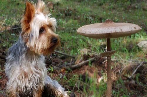 Dogilike.com :: จัดอันดับ 5 ผักที่คนชอบให้ แต่ไม่ดีกับน้องหมา !