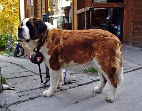 Dogilike.com :: หมาพันธุ์เล็กกับพันธุ์ใหญ่เลี้ยงด้วยกันได้ไหม ต้องดูแลอะไรบ้างนะ!