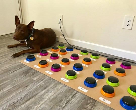 Dogilike.com :: สาวฝึกตูบให้กดปุ่มเพื่อสื่อสารสิ่งที่ต้องการ ผลลัพธ์ออกมาเป็นแบบนี้!