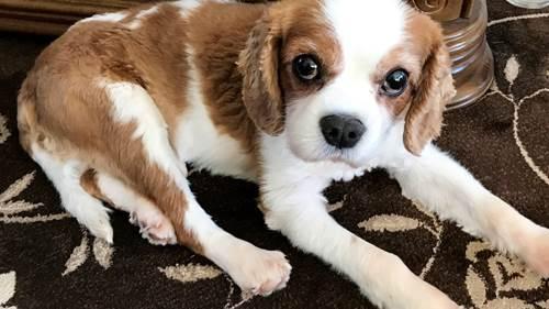 Dogilike.com :: ตูบตัวนี้หัวใจหยุดเต้นไป 10 นาที คุณหมอช่วยสุดตัวจนฟื้น !