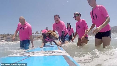 Dogilike.com :: น่ารัก! โกลเด้นฯแชมป์สุนัขโต้คลื่น สอนผู้ป่วย ผู้พิการเล่นเซิร์ฟบอร์ด