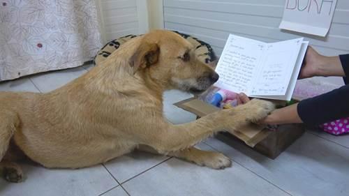 Dogilike.com :: น่ารักสุดๆ! ครอบครัวใหม่ส่งจดหมายเซอร์ไพรส์เจ้าตูบที่จะรับเลี้ยง