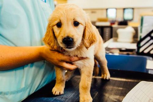 Dogilike.com :: สก็อตแลนด์เปิดรับสมัครอาสา คนจูงลูกหมา ฝึกเป็นสุนัขช่วยเหลือ