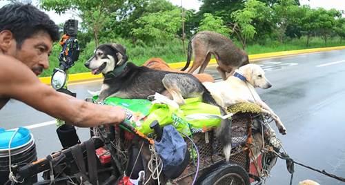 Dogilike.com :: นับถือใจ! ชายเข็นรถไปทั่วเม็กซิโก เจอหมาเจ็บป่วยช่วยตลอดทาง