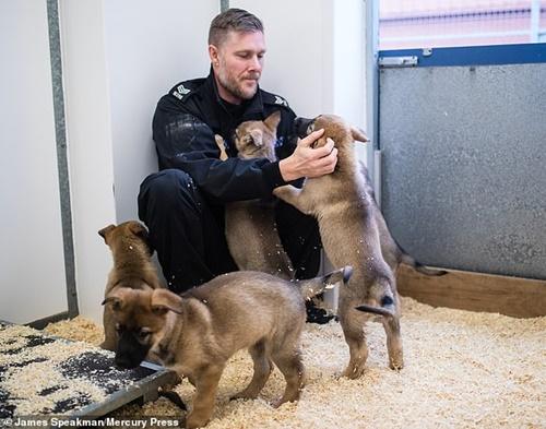 Dogilike.com :: น่ารัก! อังกฤษเผยโฉมลูกหมา 9 ตัวที่จะถูกฝึกเป็นสุนัขตำรวจ