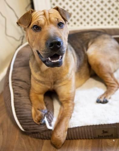 Dogilike.com :: ใจสู้! ตูบตัวนี้ถูกตัดขาล่ามโซ่ทิ้งไว้ใต้ต้นไม้ แต่มันก็ไม่ยอมแพ้