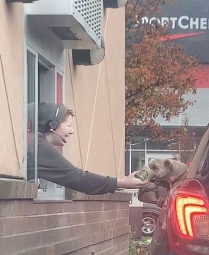 Dogilike.com :: สาวขับรถจะไปซื้อกาแฟ เห็นคันหน้าจอดนานที่แท้เพราะเหตุนี้!