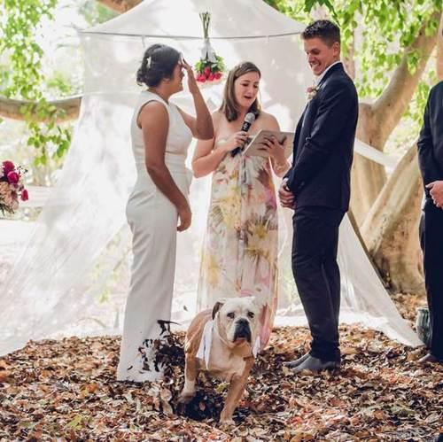 Dogilike.com :: ขำทั้งงาน! ตูบสุดรักแย่งซีนงานแต่ง ยกขาฉี่ใส่กระโปรงเจ้าสาว