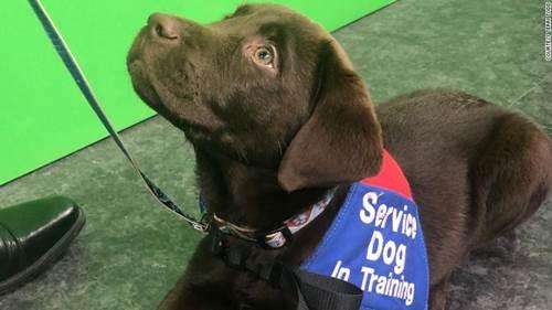 Dogilike.com :: มะกันเปิดคลาส Puppy Pilates ออกกำลังกายไปพร้อมกับลูกหมา !