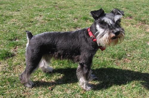 Dogilike.com :: จัดอันดับ 5 สายพันธุ์สุนัขที่นิยมใช้บำบัดผู้ป่วยจิตเวช