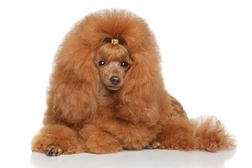 Dogilike.com :: จัดอันดับ 5 สายพันธุ์สุนัขที่นิยมเลี้ยงกับผู้ป่วยออทิสติก